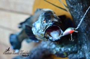River Blackfish Mount